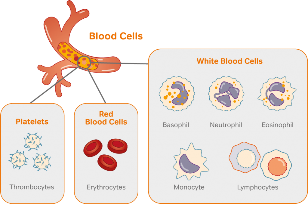 Image to show different types of blood cells